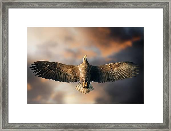 The Last Flight Framed Print