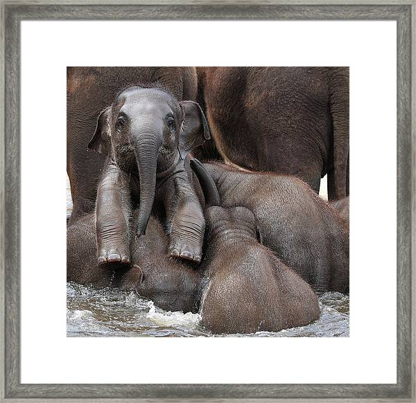 The Leader Of Tomorrow Framed Print