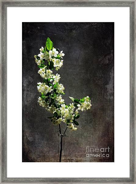 The Light Season Framed Print