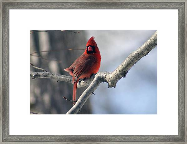 The Little Red Guy Framed Print