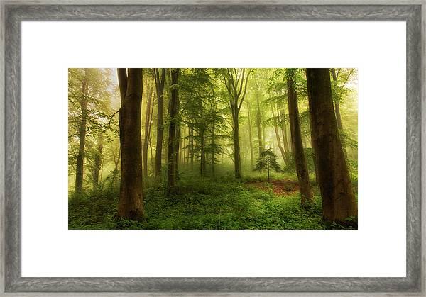 The Little Tree Framed Print