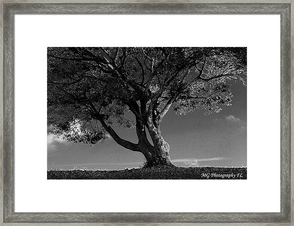 The Lone Tree Black And White Framed Print