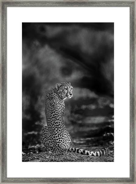 The Look Back Framed Print