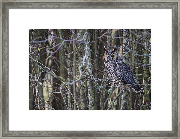 The Look Of Surprise Framed Print