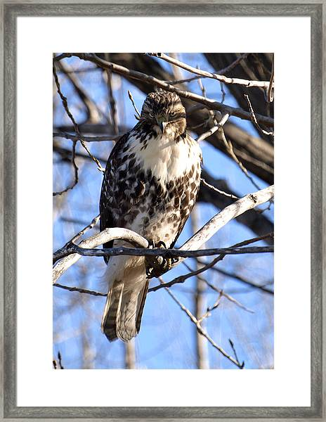 The Look Says It All Framed Print