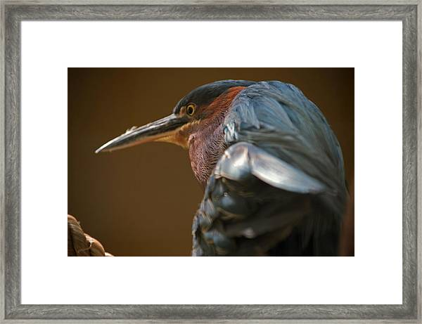 The Mad Guy Framed Print