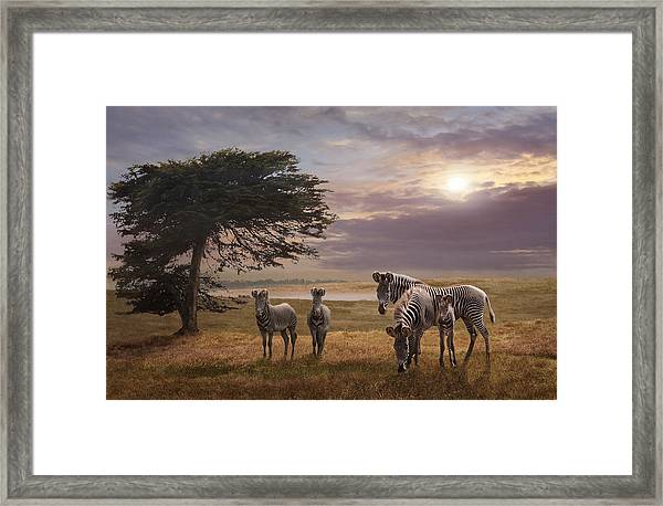 Framed Print featuring the photograph The Mane Event by Melinda Hughes-Berland