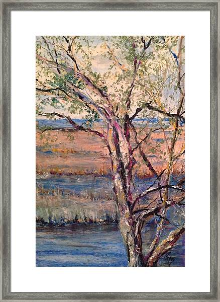 The Marsh And The Live Oak Framed Print