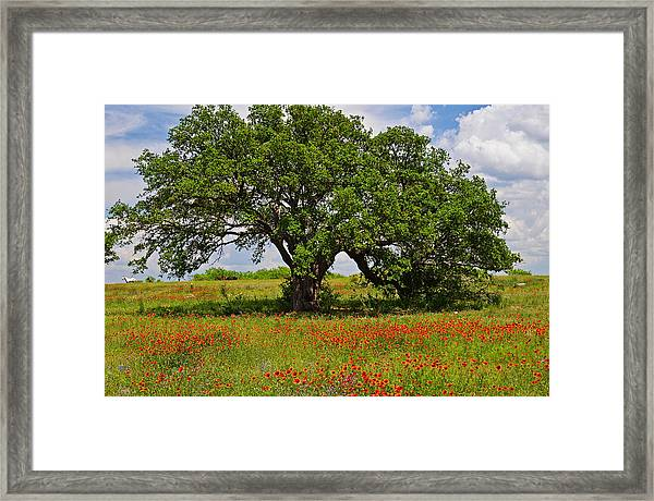 The Mighty Oak Framed Print