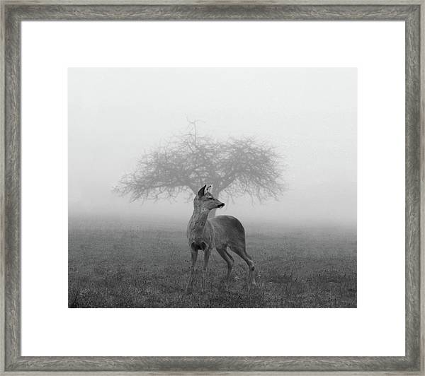 The Mist Framed Print
