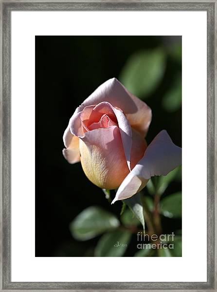 The Morning Pink Rose Framed Print