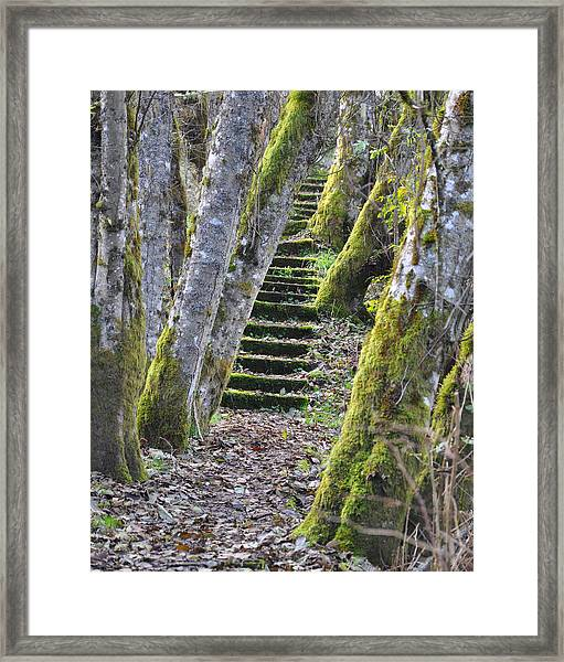 The Moss Stairs Framed Print