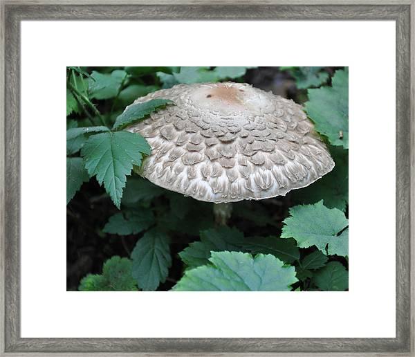 The Mushroom Framed Print