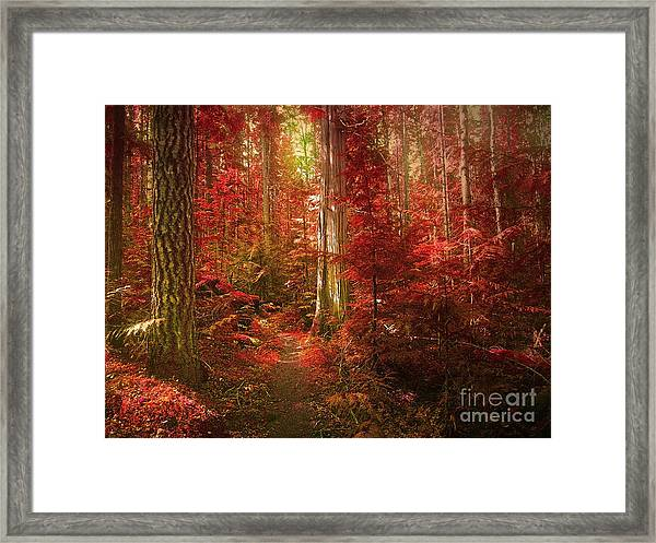 The Mystic Forest Framed Print