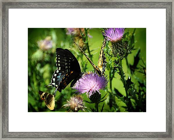 The Nectar Seekers Framed Print