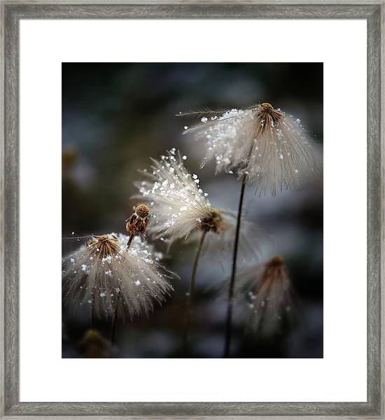 The New Dress Framed Print