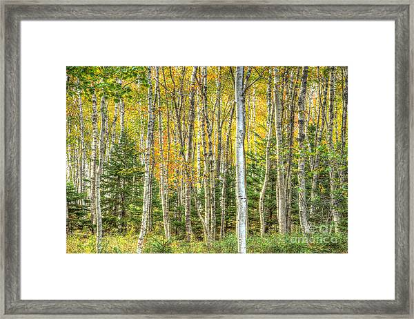 The North Woods Framed Print