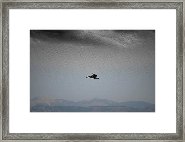 The Persevering Pelican Framed Print