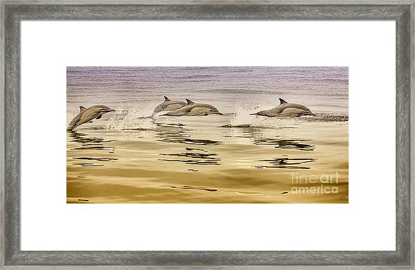 Dolphin Room Decor Print Framed Print