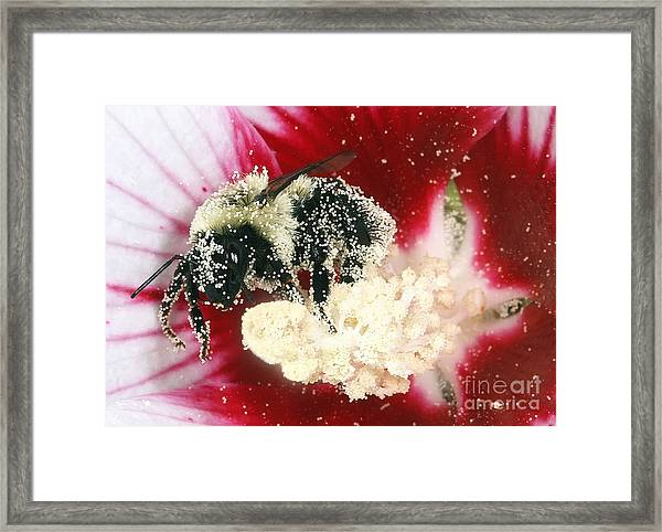 The Pollinator Framed Print