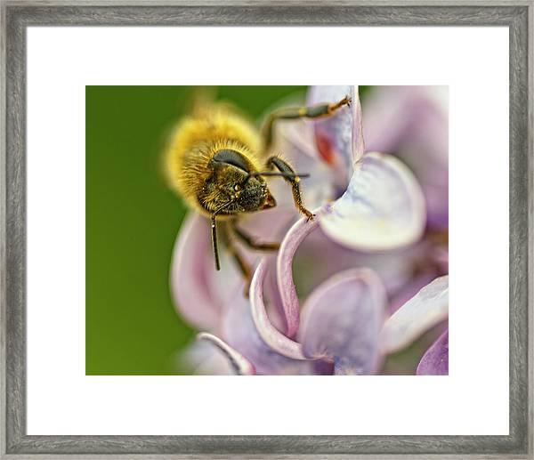 The Pollinator Framed Print