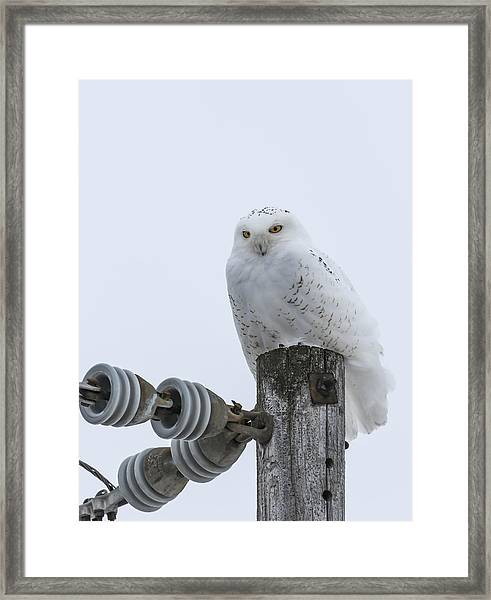 The Power Of The Owl Framed Print