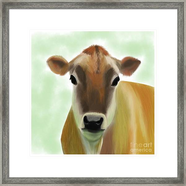 The Pretty Jersey Cow  Framed Print