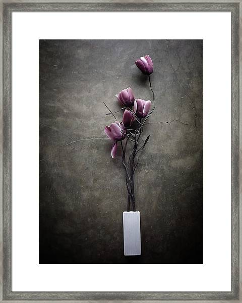 The Purple Tulip Framed Print