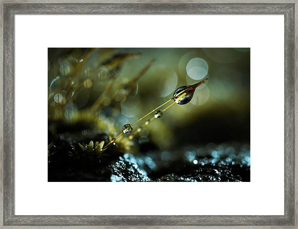 The Quantum Theory Of Gravity Framed Print