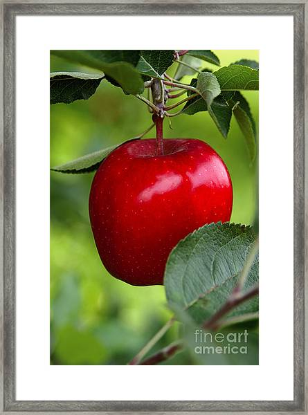 The Red Apple Framed Print