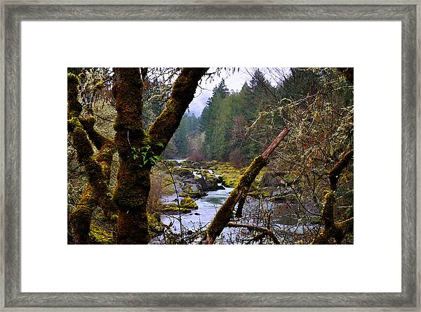 The River Through The Trees Framed Print