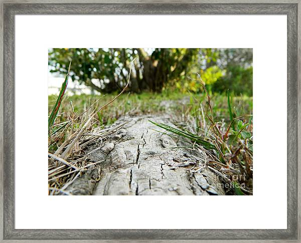 The Root Of Happiness Framed Print