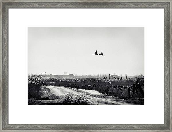 The Rustle Of The Wind Framed Print