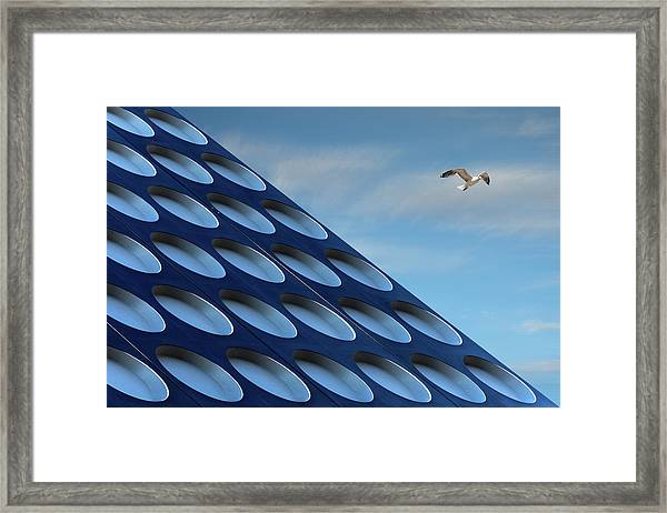 The Seagull Framed Print by Henk Van Maastricht