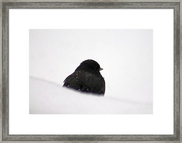 The Snow Thinker Framed Print