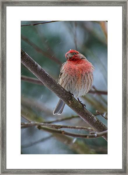 The Snowflake Framed Print