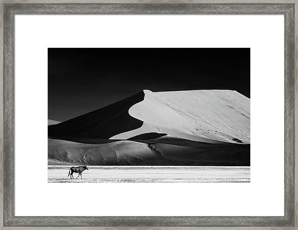 The Solitary Framed Print