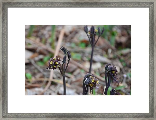 The Spring Sisters Framed Print