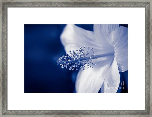 The Spring Wind Whisper Framed Print