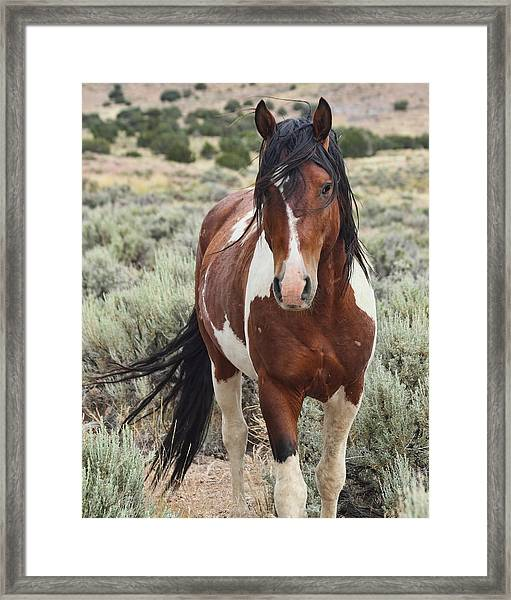 The Stallion Framed Print by Gene Praag