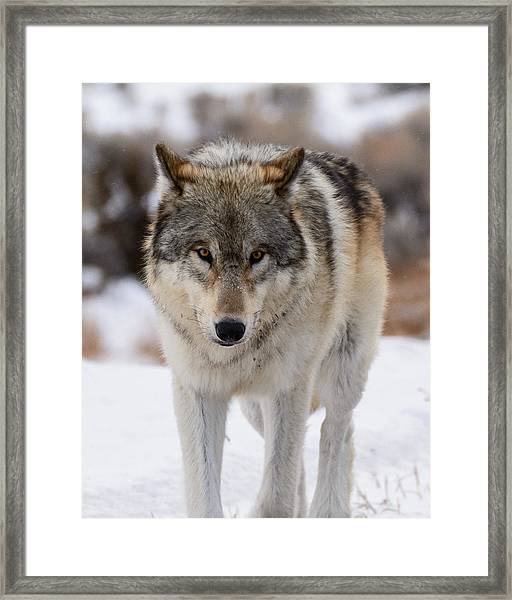 The Stare Framed Print by Robert Yone