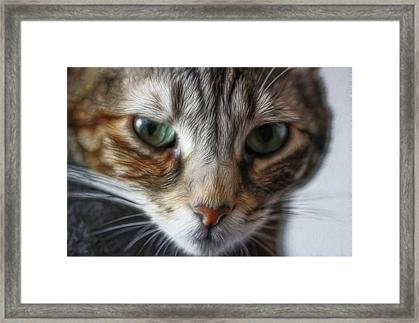 00002 The Stare Framed Print
