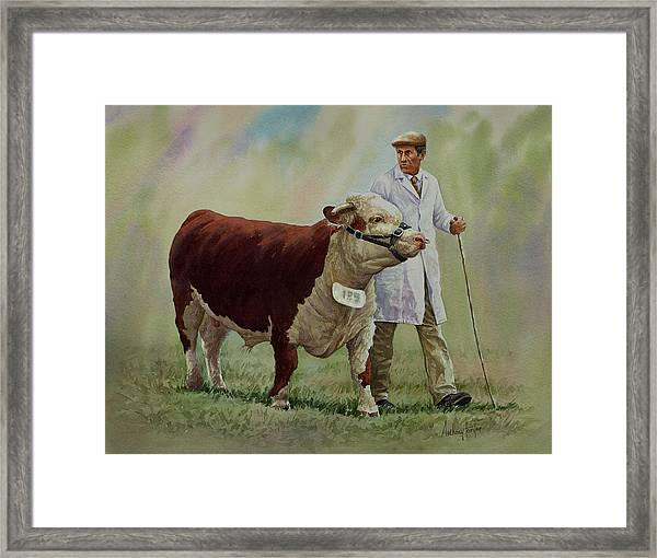 The Stockman And Bull Framed Print