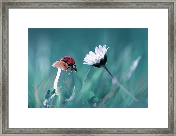 The Story Of The Lady Bug That Tries To Convice The Mushroom To Have A Date With The Beautiful Daisy Framed Print by Fabien Bravin