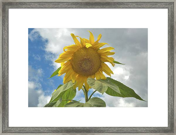 The Sun Is Out Framed Print