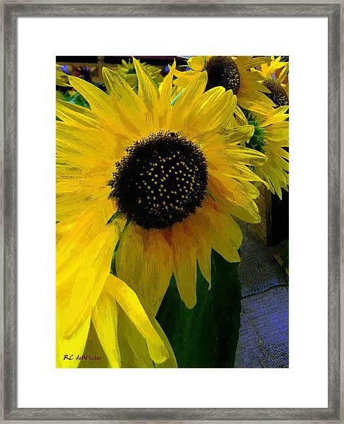 The Sun King Framed Print