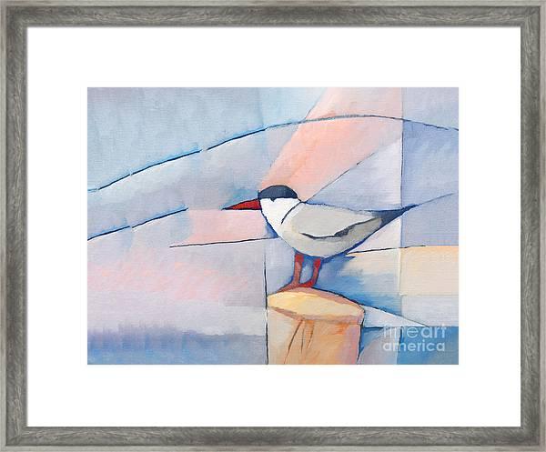 The Tern Framed Print