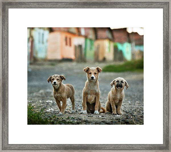 The Three Musketeers Framed Print by Sorin Onisor