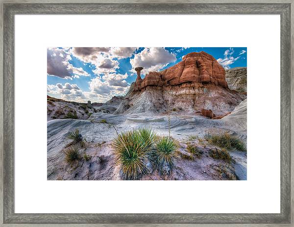 The Toadstools Framed Print