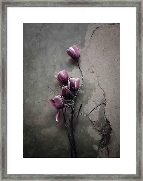 The Tulip Framed Print by Kahar Lagaa